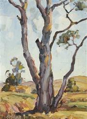 Sale 8870 - Lot 2001 - Anton Riebe (1905-1986) - Gum Tree (Study) 24 x 18cm