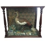 Sale 8268A - Lot 33 - VICTORIAN TAXIDERMY DUCK
