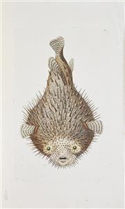 Sale 8306A - Lot 44 - Frederick Polydor Nodder (act. 1777 - 1795) (12 plates) - Studies of Fish and Molluscs ( from Naturalists Miscellany) various sizes
