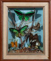 Sale 8882H - Lot 27 - A Diorama of Australian butterflies. Total frame size 44 x 36cm