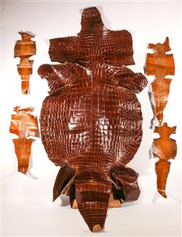 Sale 9110 - Lot 17 - A collection of various Crocodile skins (three full size, largest 230cm)