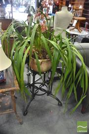 Sale 8406 - Lot 1185 - Established 4 Spike Orchid in Terracotta Planter