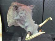 Sale 8431A - Lot 660B - Taxidermy Warthog