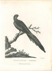 Sale 9037A - Lot 5012 - Peter Mazell (1733 - 1808) - Pennantian Parrot (Crimson Rosella), 1789 copper engraving