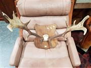 Sale 8697 - Lot 1054 - Mounted Deer Antlers