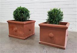 Sale 9102 - Lot 1295 - Pair of miniature buxus in square terracotta planters (h:35 x w:40 x d:40cm)