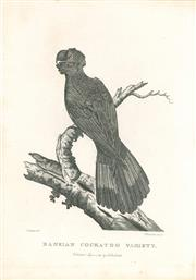 Sale 9037A - Lot 5016 - Sydenham Teast Edwards (c1768 - 1819) - Bankian Cockatoo Variety (Red-Tailed Black Cockatoo),1789 copper engraving