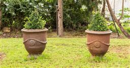 Sale 9191W - Lot 411 - A pair of Anduze style  stoneware urns  with Buxus pyramids. H .70cm H. with Buxus  120cm