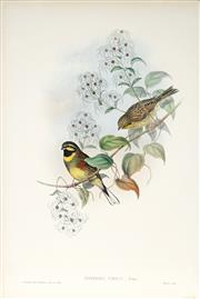 Sale 8977A - Lot 5003 - John Gould (1804 - 1881) - EMBERIZA CIRLUS: Cirl Bunting hand-coloured lithograph, with letterpress text sheet (unframed)