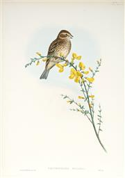 Sale 9037A - Lot 5039 - John Gould (1804 - 1881) - EMBERIZA CALANDRA: Common Bunting hand-coloured lithograph, with letterpress text sheet (unframed)