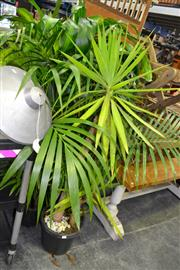 Sale 7987A - Lot 1136 - Collection of 5 Plants