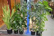 Sale 7987A - Lot 1174 - Collection of 5 Plants