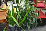 Sale 7987A - Lot 1190 - Collection of Plants