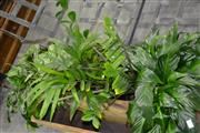 Sale 7987A - Lot 1192 - Collection of Plants