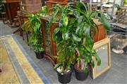 Sale 7987A - Lot 1208 - Collection of 5 Plants