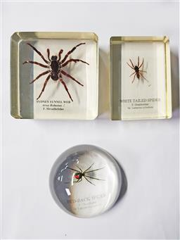 Sale 9254 - Lot 2151 - 3 Spider Paper Weights ( Red-Back, Sydney Funnel Web, White Tailed Spider)