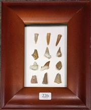 Sale 8758 - Lot 226 - Collection of Fossil Teeth, framed