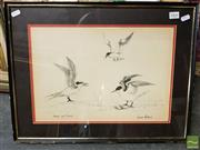 Sale 8582 - Lot 2004 - Coral Gutherie - Noddy and Terns 27 x 40cm