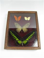 Sale 8331A - Lot 590 - Butterfly Collection, specimens collected 1980, prepared October 1998