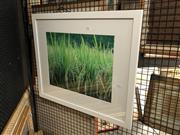 Sale 8856 - Lot 2047 - Artist Unknown Bali Grass photograph, 56 x 67cm (frame, signed -