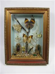 Sale 8331A - Lot 589 - Early C20th Insect Diorama, in frame