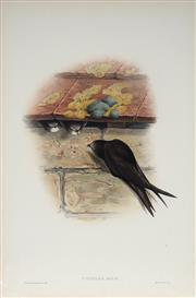 Sale 8977A - Lot 5025 - John Gould (1804 - 1881) - CYPSELUS APUS: Swift hand-coloured lithograph, with letterpress text sheet (unframed)