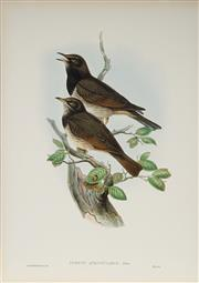 Sale 8977A - Lot 5026 - John Gould (1804 - 1881) - TURDUS RUFICOLLIS ATROGULARIS: Black-Throated Thrust hand-coloured lithograph, with letterpress text shee...