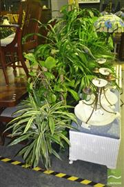 Sale 8227 - Lot 1068 - Collection of Indoor Plants