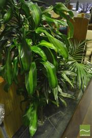 Sale 8227 - Lot 1080 - Collection of Indoor Plants