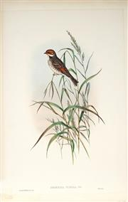 Sale 9037A - Lot 5051 - John Gould (1804 - 1881) - EMBERIZA PUSILLA PALLAS: Dwarf Bunting hand-coloured lithograph, with letterpress text sheet (unframed)