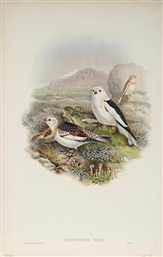 Sale 8977A - Lot 5033 - John Gould (1804 - 1881) - PLECTROPHENAX NIVALIS: Snow Bunting hand-coloured lithograph, with letterpress text sheet (unframed)