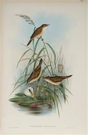Sale 8977A - Lot 5036 - John Gould (1804 - 1881) - ACROCEPHALUS SCIRPACEUS: Reed Warbler hand-coloured lithograph, with letterpress text sheet (unframed)