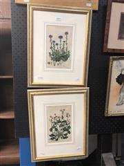 Sale 8850 - Lot 2003 - Pair of Antique Botanical Plates. After ED Smith (engraved by A Bailey) 40 x 31cm (frames)