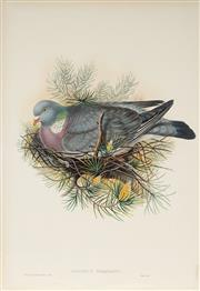Sale 8977A - Lot 5040 - John Gould (1804 - 1881) - COLUMBA PALUMBUS: Wood Pigeon hand-coloured lithograph, with letterpress text sheet (unframed)