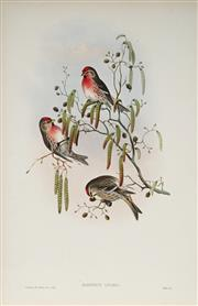 Sale 8977A - Lot 5041 - John Gould (1804 - 1881) - ACANTHIS FLAMMEA: Redpole hand-coloured lithograph, with letterpress text sheet (unframed)