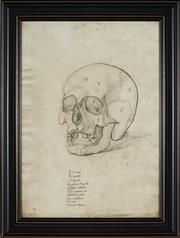 Sale 9036 - Lot 2027 - A Decorative Print of a Renaissance Anatomical Study of a Human Skull, 72.5 x 55.5cm (frame)