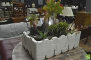 Sale 8418 - Lot 1074 - 7 Established Succulents