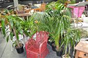 Sale 7987A - Lot 1230 - Collection of Plants