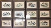 Sale 8758 - Lot 379 - Assortment of Avian Themed Handcoloured Lithographs (12)