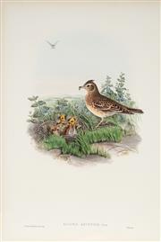 Sale 8977A - Lot 5055 - John Gould (1804 - 1881) - ALAUDA ARVENSIS: Sky Lark hand-coloured lithograph, with letterpress text sheet (unframed)