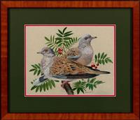Sale 8934H - Lot 27 - Kenneth Smith, a pair of European turtledoves 1978, signed and dated lower right 1978, 26cm x 34cm
