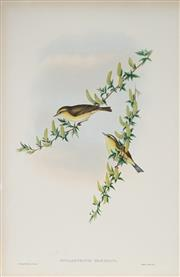 Sale 8977A - Lot 5061 - John Gould (1804 - 1881) - PHYLLOSCOPUS TROCHILUS: Willow Wren hand-coloured lithograph, with letterpress text sheet (unframed)