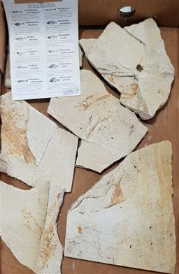 Sale 9129 - Lot 1086 - Box of fossils