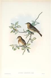 Sale 9037A - Lot 5069 - John Gould (1804 - 1881) - LULLULA ARBOREA: Tree Pipit hand-coloured lithograph, with letterpress text sheet (unframed)