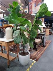 Sale 8744 - Lot 1019 - Fiddle Leaf Fig in Grey Ceramic Planter