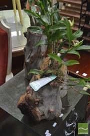 Sale 8341 - Lot 1071 - Three Orchids in Hollow Logs