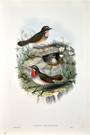 Sale 8434 - Lot 574 - John Gould (1804 - 1881) - CALLIOPE CAMTCHATKENSIS: Siberian Ruby Throat 54.5 x 37cm (sheet size)