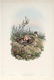 Sale 9037A - Lot 5073 - John Gould (1804 - 1881) - CUCULUS CANROUS: Young Cuckoo ejecting its nestling companions hand-coloured lithograph (unframed)