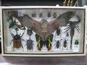 Sale 8107A - Lot 1582 - Insect Display incl Bat & Scorpion, framed