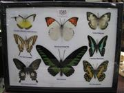 Sale 8107A - Lot 1583 - Butterfly Display, framed